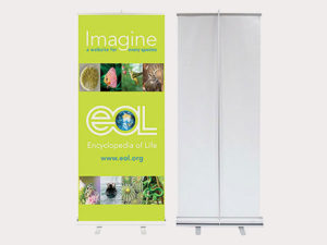Displays & Large Format
